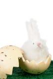 Śliczny Wielkanocny królik w eggshell Fotografia Royalty Free