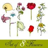 ślicznych kwiatów obrazkowy set Obrazy Stock