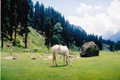 Lidder valley. In Kashmir in India Stock Photo