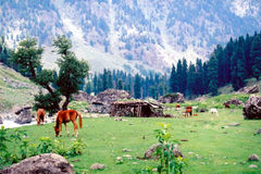 Lidder valley (2). Lidder valley in Kashmir in India Stock Photos