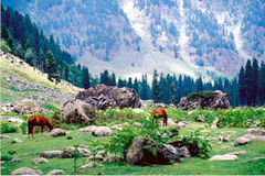 Lidder valley (3). Lidder valley in Kashmir in India Stock Image