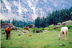 Lidder valley (4). Lidder valley in Kashmir in India Stock Images
