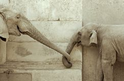 Liebe der Elefanten Stockbild