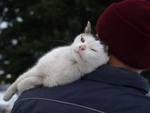 Liebe der Katze stockfotografie
