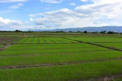 Liebe des grünen Bauernhofes Lizenzfreie Stockfotos