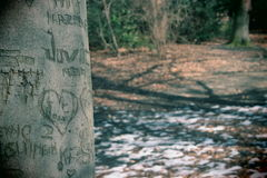 Liebe im Wald Stockfotografie