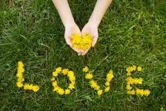 Liebe mögen eine Blume Stockfoto
