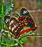Liebe mit zwei Schmetterlingen Lizenzfreies Stockbild