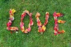 Liebe, Name von Blättern Lizenzfreie Stockfotografie
