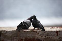 Liebe und Tauben Stockfotografie