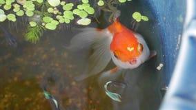 Liebe von den Fischen stockfoto