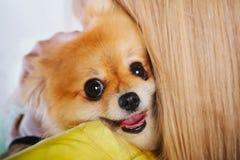 Liebe von Hunden Schöne junge Frau hält einen Welpen auf ihren Händen Ein Mädchen hält einen Hund Nationaler Haustier ` s Tag Ein lizenzfreies stockfoto