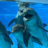 Lieben die lachenden lächelnden Tiere der natürlichen lustigen Schönheit des blauen Wassers der Delphine, die geschwitzte Familie Lizenzfreie Stockfotos