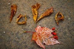 Lieben Sie diesen Herbst Stockfotos
