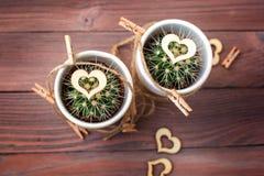 Lieben Sie Herzkakteen mit hölzernem und natürlichem Seil Lizenzfreies Stockfoto