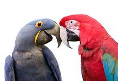 Lieben Sie Vögel Lizenzfreie Stockfotos