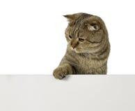 Liebenswürdige Katze über leerem Plastikbrett mit freiem Raum für Ihren Text Stockfotografie