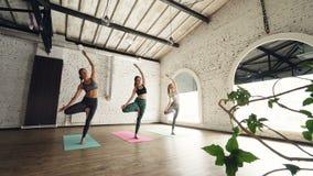 Liebenswürdige Mädchen tun balancierenden Yogakomplex in Baumposition Dünne Frauen sind konzentriert und ernst, sind sie stock footage