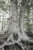 Liebes-Baum stockfotografie