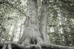 Liebes-Baum stockbild