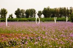 Liebes- und Lavendelfeld Stockfotos
