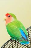 Liebes-Vogel Lizenzfreie Stockbilder