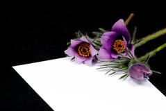 Liebesbrief mit Blumen Stockbild