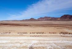 Liebesmeldungen in der Wüste Stockbilder