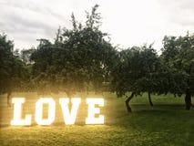 Liebesneonbuchstaben unter Bäumen Stockfotografie