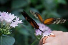 Liebesring mit Schmetterlingen im Hintergrund stockbild