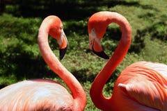 Liebesvögel Stockfotos