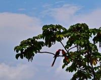 Liebesvögel und ein Baum Lizenzfreie Stockfotografie