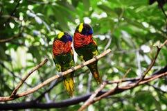Liebesvögel und ein Baum Stockbild