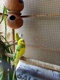 Liebesvögel und ein Baum Lizenzfreies Stockbild