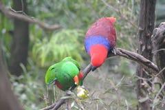 Liebesvögel und ein Baum Lizenzfreies Stockfoto