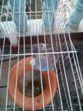 Liebesvogel Stockfotografie