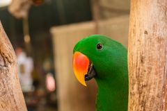 Liebesvogel im Zoo Lizenzfreie Stockfotografie