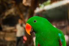 Liebesvogel im Zoo Lizenzfreie Stockfotos