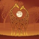 Liebevolle Giraffen Stockfoto