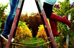 Liebevolle Paare in einem wineyard Lizenzfreie Stockbilder