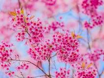 Liebevolle Paare Schöne blühende rosa Blumen Lizenzfreie Stockfotos