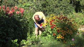 Liebevoller Ehemannfreund-Kerlmann kurz gesagt Rudbeckia auswählend blüht im sonnigen Garten 4K stock video
