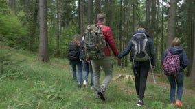Liebevolles jugendlich Paarhändchenhalten, das zusammen durch das Holz mit ihren Freunden auf Wanderungstrekkingswald geht - stock video