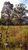 Liebhaber-Bäume Lizenzfreie Stockfotografie