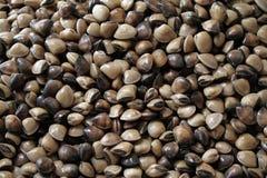 Lieblingsleute essen Meer Sabah Stockfotos