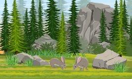 Liebres de Gray European en el prado Bosque de la picea, piedras y montañas, hierba libre illustration