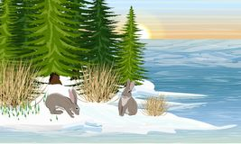 Liebres en la orilla de un lago del bosque Primavera Hielo de fusión, los primeros snowdrops Bosque Spruce ilustración del vector