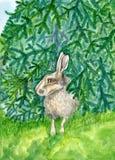 Liebres que ocultan bajo ejemplo de los animales de la acuarela del árbol de abeto pintado a mano Foto de archivo libre de regalías