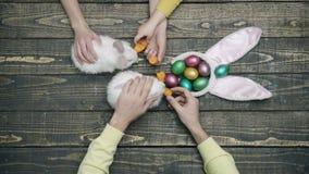 Liebres y huevos de Pascua en una tabla de madera Pascua feliz Primer de las manos que alimentan los conejos de Pascua Animales d almacen de video