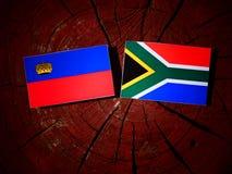 Liechtenstein flaga z południe - afrykanin flaga na drzewnego fiszorka isola Zdjęcia Royalty Free